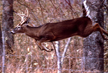 Five steps to taking trophy whitetails