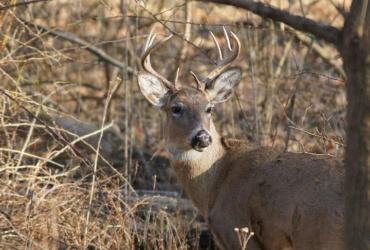 Questions and answers: bowhunting whitetails