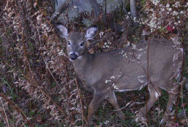Deer hunters should be sensible about scents