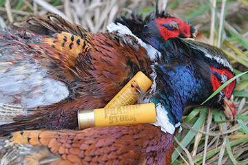 Choosing a reliable shotshell for upland hunting