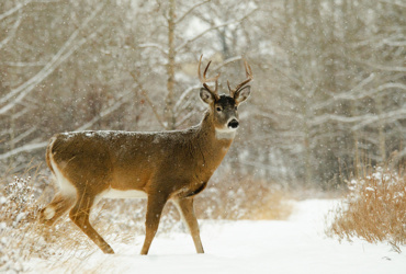 Scout now for next season's buck
