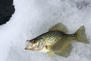 Ice-fishing tip: Knowing when not to practice catch-and-release
