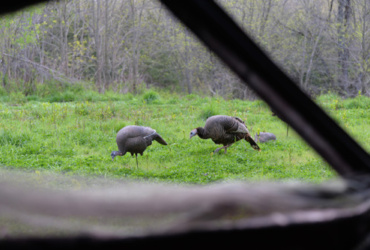 Quick ticket to more turkey kills: buy better decoys
