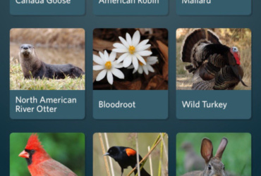 As peak spring migration looms, 'Seek' new nature game apps and tools