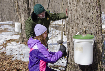 Let it flow: Maple syrup programs on tap at Minnesota state parks