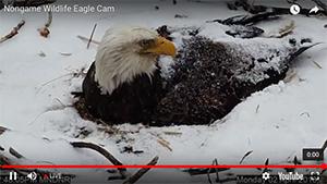 Eagle Cam update: Cruel winter taking its toll [video]