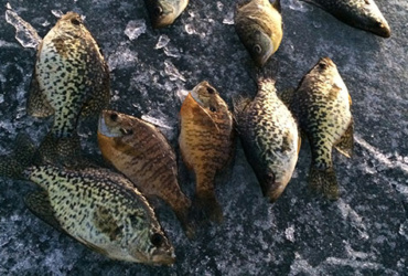 Ice fishing tip: Catching late-season crappies you didn't know existed