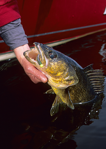 Fast and furious walleye jigging tips for opener and early season open-water fishing [video]