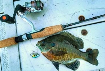 Summer multi-species fishing fun: the micro-lure challenge