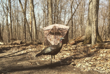 Wild turkey hunting tips: preparing for your spring hunt