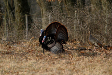 Mentors can learn from novice hunters