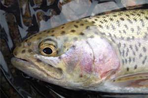 School of fish: Ohio school kids embrace Trout in the Classroom program