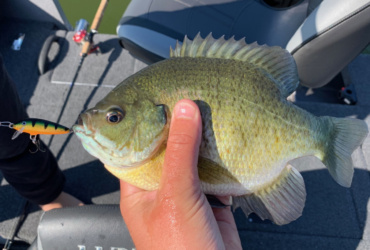 Shorter days fishing tip: Use bigger baits to target larger bluegills in the school