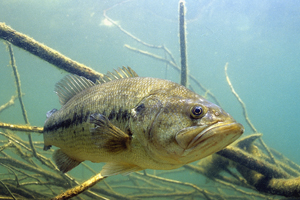 3 Lures to Get You Started for Spring Bass Fishing