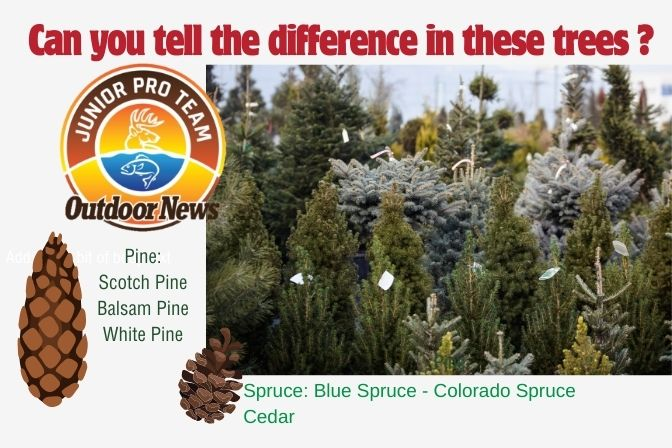 Outdoor News Junior Pro Team Image Showing Different Types of  Christmas Trees